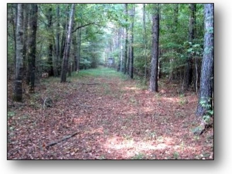 97 Acres In Oktibbeha County : Sturgis : Oktibbeha County : Mississippi