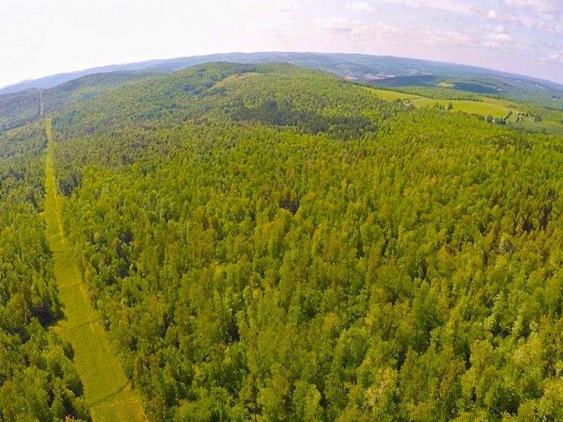 Timberland Hunting Land 1028 Acres : Windsor : Broome County : New York