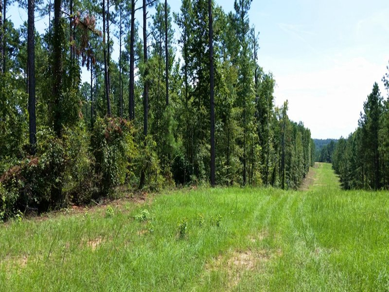 Recreation & Timber Investment : North Augusta : Edgefield County : South Carolina