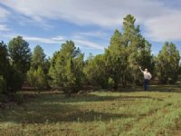 Northern Arizona Forested Cabinsite : Vernon : Apache County : Arizona