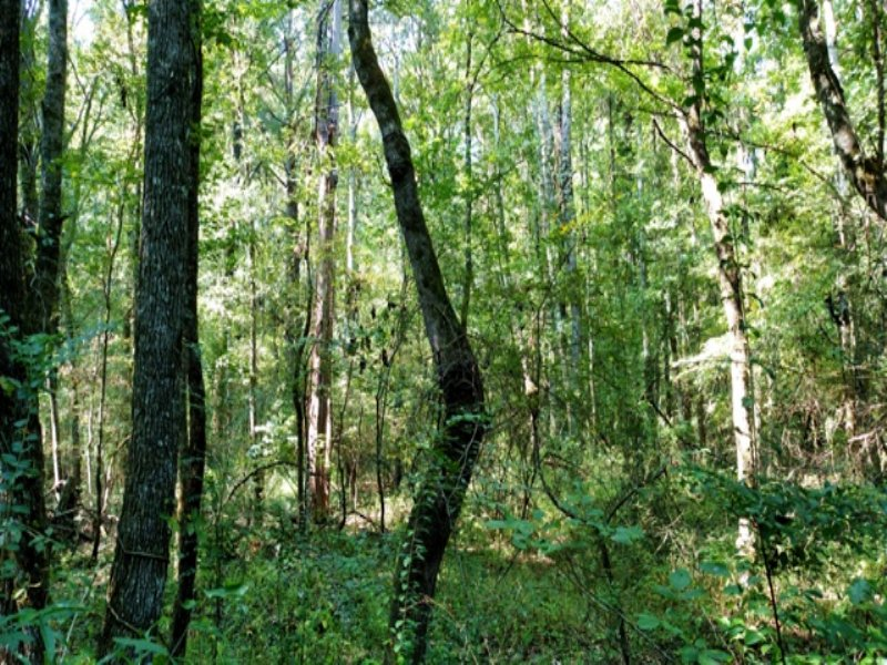 13 Acres For Sale : Pheba : Clay County : Mississippi