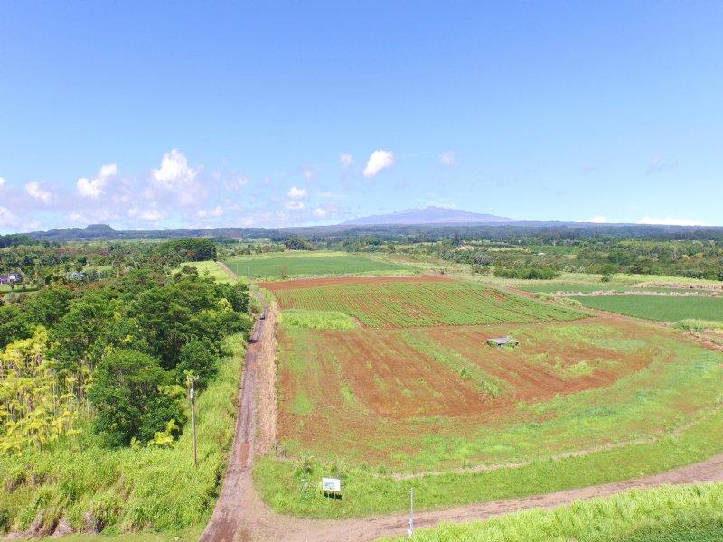 Heavenly-honomu Subdivision : Pepeekeo : Hawaii County : Hawaii