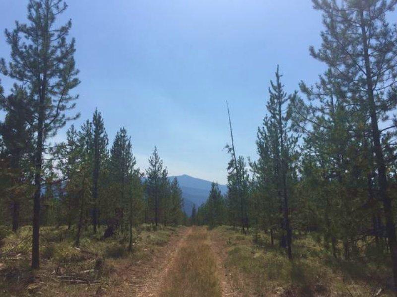 Twin Creek Recreation : Deborgia : Mineral County : Montana