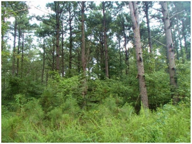 143.00 Acres Timber Land : Ackerman : Choctaw County : Mississippi