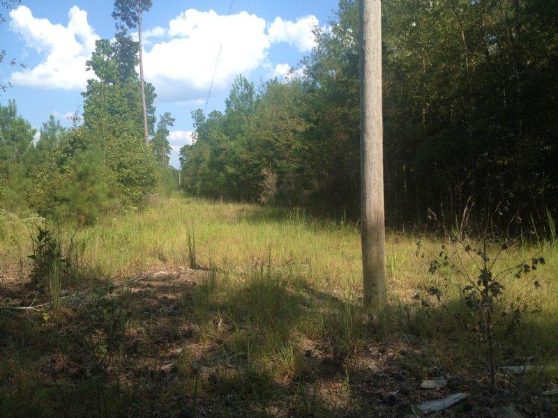 Packard Bend Tract : Vredenburgh : Monroe County : Alabama