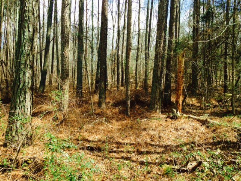 40 +/- Wooded Acres : Cartersville : Bartow County : Georgia
