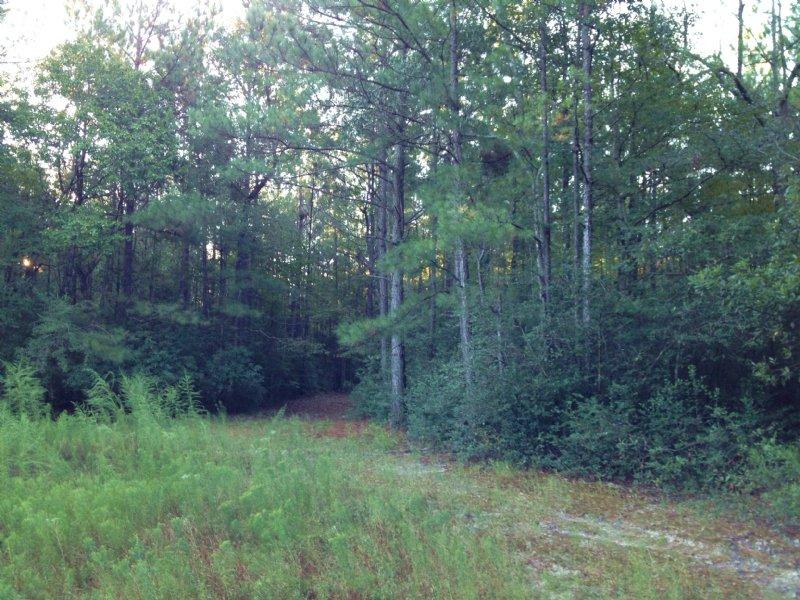 County Line 40 : Citronelle : Washington County : Alabama