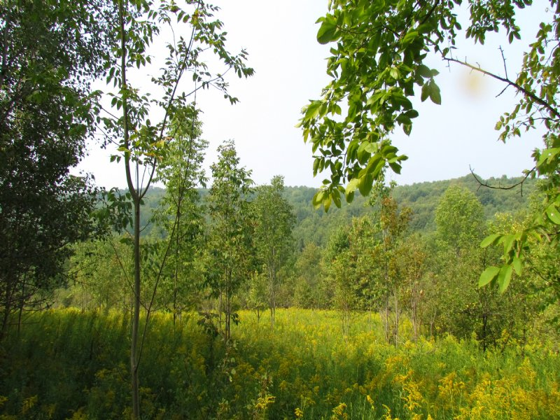 100 Acres Woods Stream Hunting : Solon : Cortland County : New York