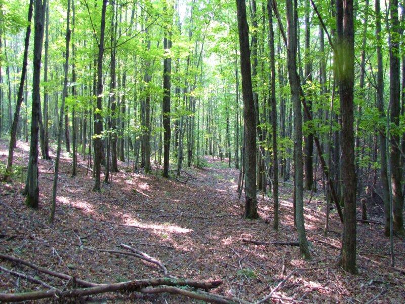 112 Acres Hunting Land Cortland : Solon : Cortland County : New York