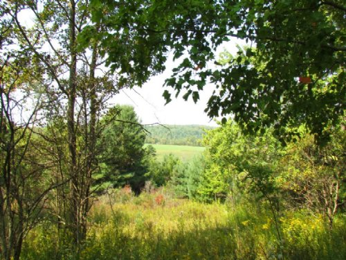 50 Acres Hunting Land Woods Views : Willet : Cortland County : New York