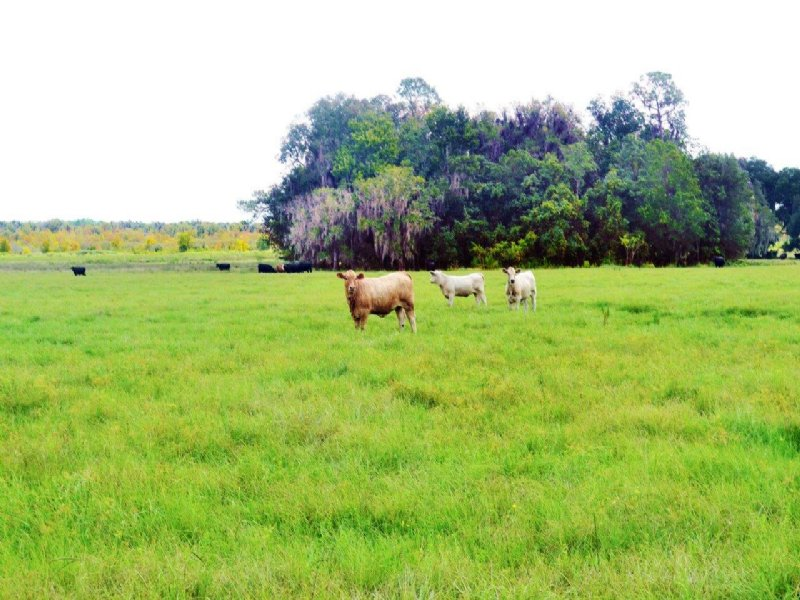 Lonesome Ranch : Lake Wales : Polk County : Florida