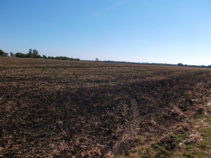135 Acres Of Cuiltivated Row Crop : Roxton : Lamar County : Texas