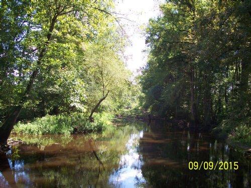 Edisto River Tract : Canadys : Colleton County : South Carolina
