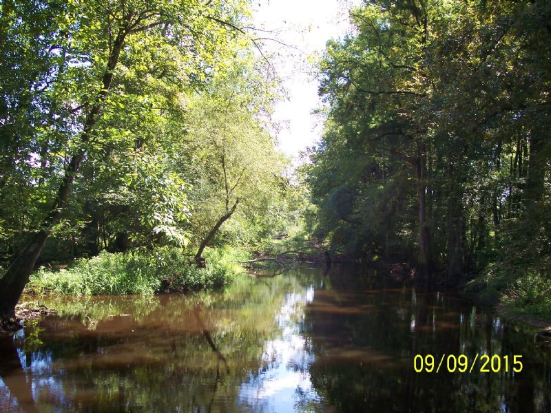 Edisto River Tract : Canadys : Colleton County : South Carolina