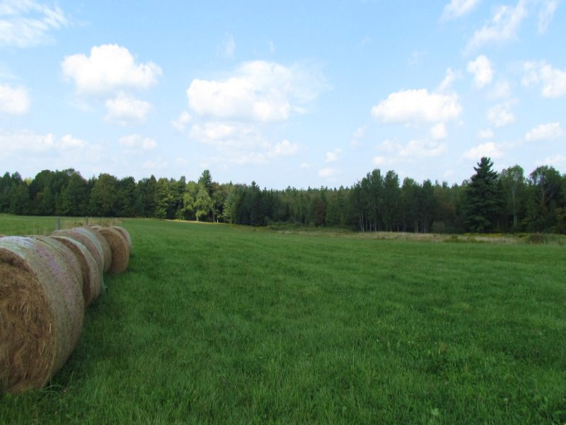 Farmland Woodland Near State Forest : East Pharsalia : Chenango County : New York