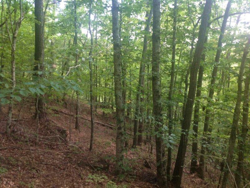 Little Indian Creek Tract : Northport : Tuscaloosa County : Alabama
