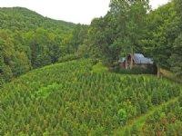 Glorious Natural Beauty : Scaly Mountain : Macon County : North Carolina