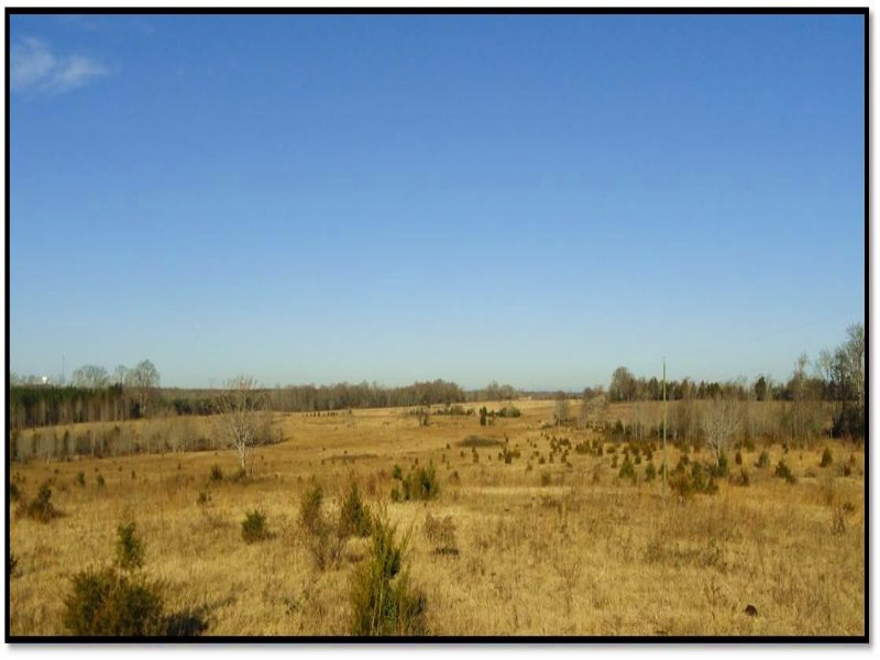 Old Dairy Tract : Gray Court : Laurens County : South Carolina