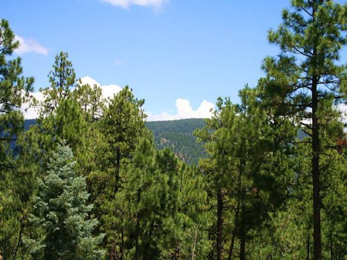 8 Acre Forested Northern Az Estate : Alpine : Apache County : Arizona