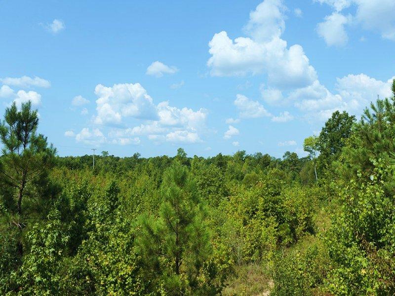 Hunting & Timber Investment : Wadesboro : Anson County : North Carolina