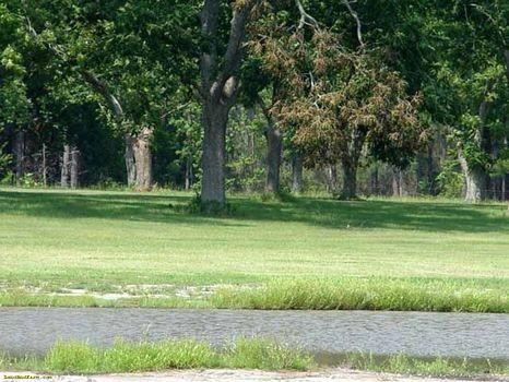 24 ac Farm/Home/Pasture/Pecan Grove : Alamo : Wheeler County : Georgia