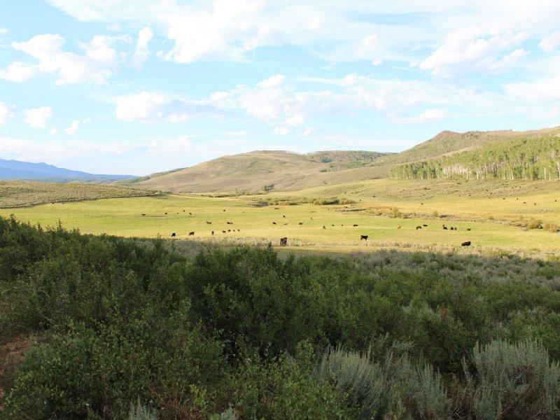 3 Bee Ranch : Coalmont : Jackson County : Colorado