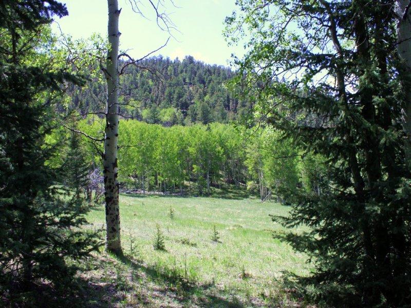 Elk Haven : Westcliffe : Custer County : Colorado