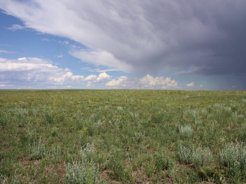 Peyton 120 Acres -price Reduced! : Peyton : El Paso County : Colorado