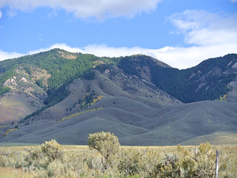 Trophy Elk And Mule Deer Mountain R : Cokeville : Lincoln County : Wyoming