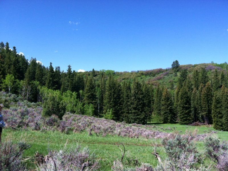 Sawmill Creek Ranch : Meeker : Rio Blanco County : Colorado