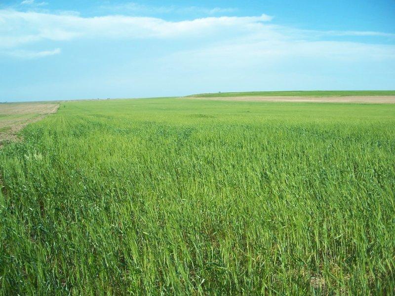 Cheyenne County Dryland Farm : Lodgepole : Cheyenne County : Nebraska
