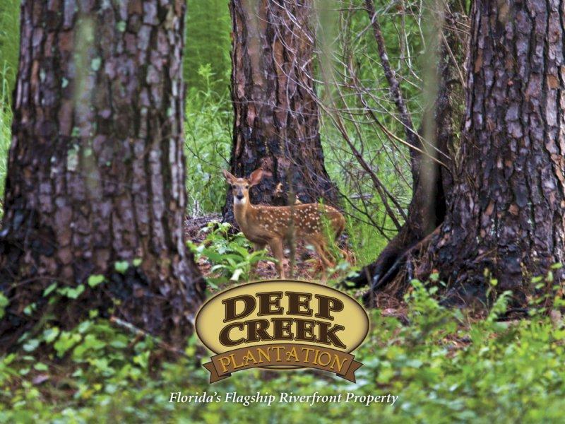 Deep Creek Plantation : Lake City : Columbia County : Florida