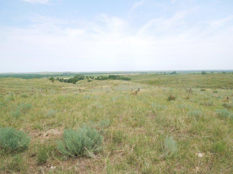 Lincoln County Grass : Sutherland : Lincoln County : Nebraska