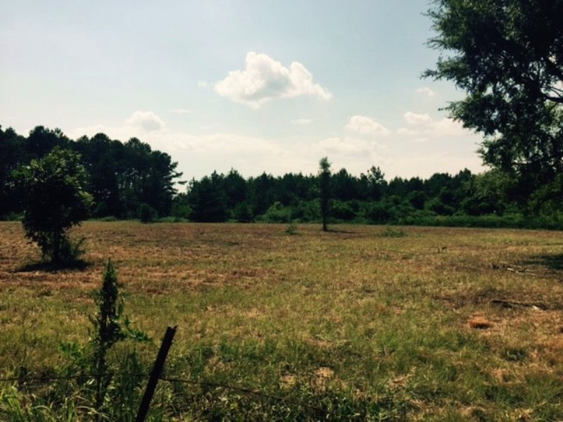 14.50 Acres Hunting Land, Timber : Carson : Jefferson Davis County : Mississippi