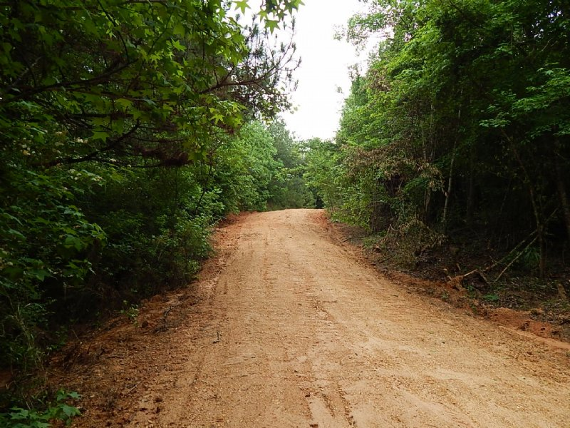 31.00 Acres Hunting Land, Timber : Mccall Creek : Franklin County : Mississippi