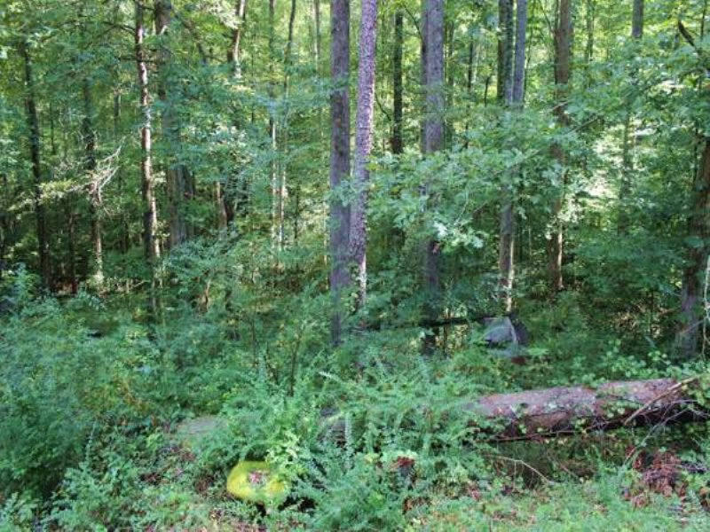 Lake View Lot On Creek : Gainesville : Forsyth County : Georgia