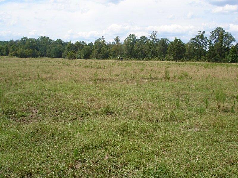 Rice Creek Pasture Land : Marion : Perry County : Alabama
