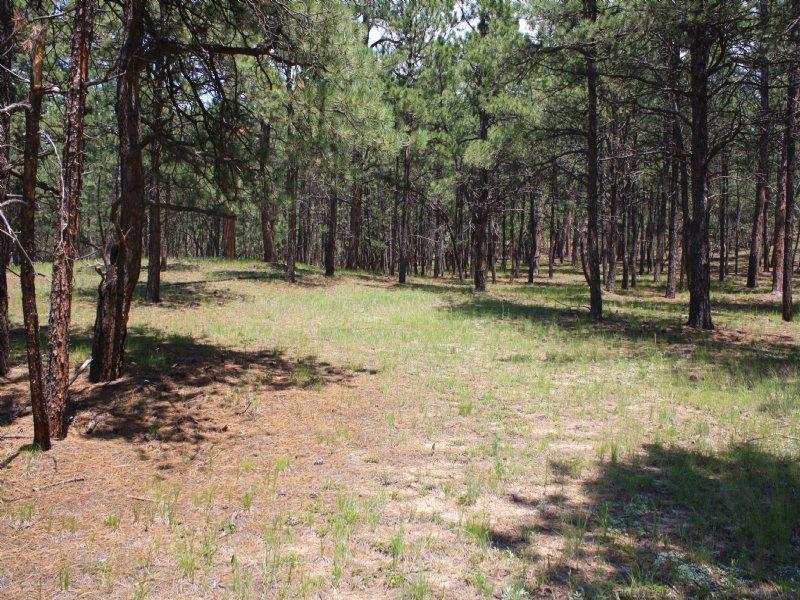 11005 Huntsman Road : Colorado Springs : El Paso County : Colorado
