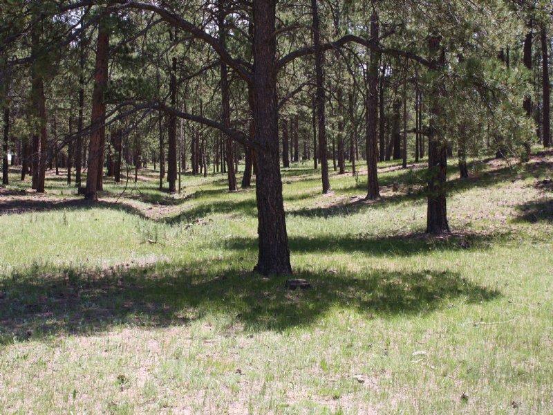 11025 Huntsman Road : Colorado Springs : El Paso County : Colorado