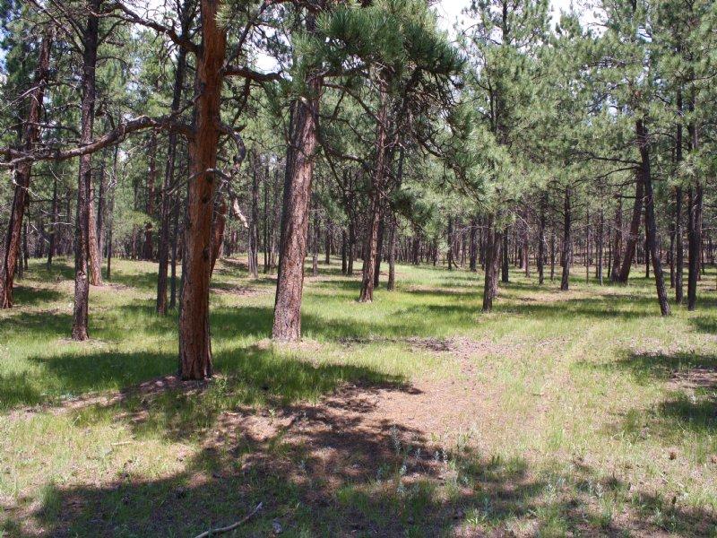 11055 Huntsman Road : Colorado Springs : El Paso County : Colorado