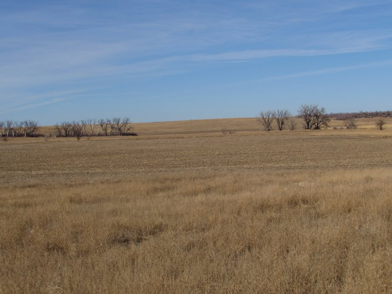 Bottomland On Beaver Creek : Goodland : Sherman County : Kansas