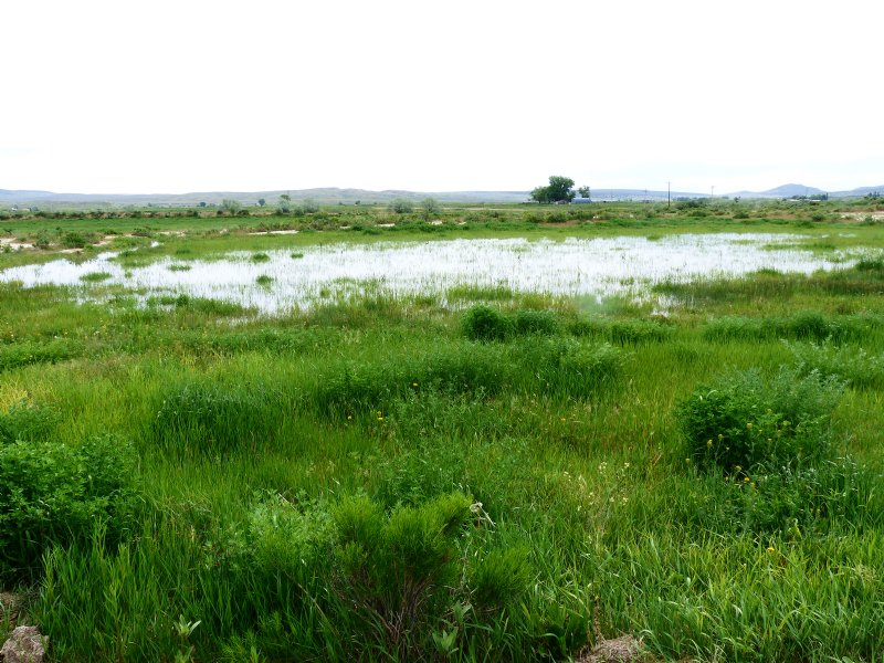 Home, Water Rights And Pasture : Maybell : Moffat County : Colorado