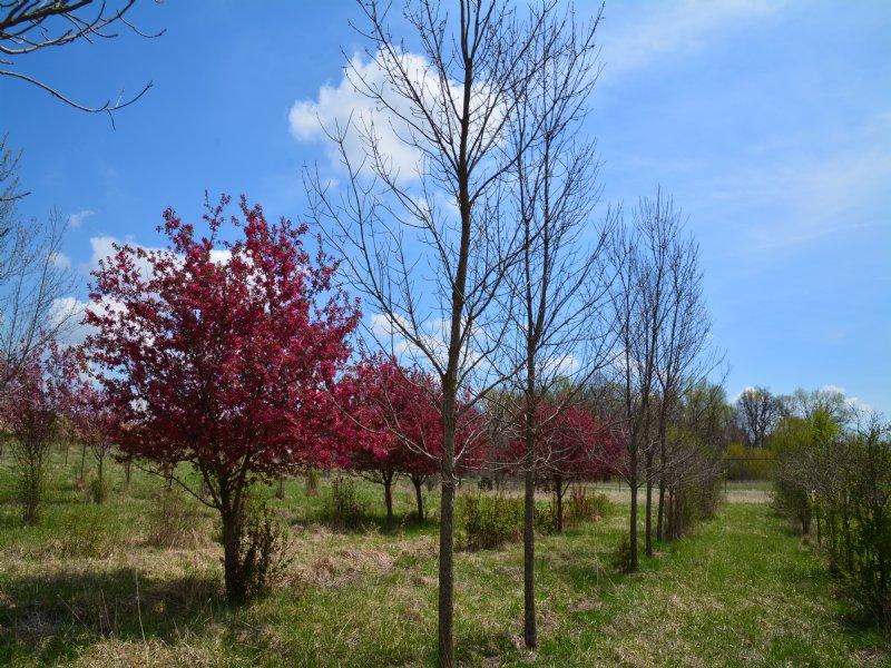 Authentic High Fenced Nemaha Land : Centralia : Nemaha County : Kansas