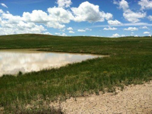 Bijou Valley 80 : Kiowa : Elbert County : Colorado