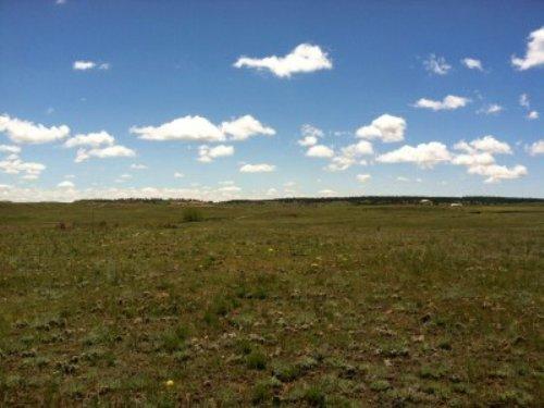 Fiddleback 80 : Kiowa : Elbert County : Colorado