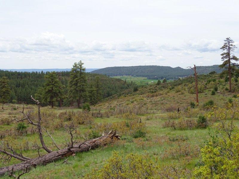 Beaver Creek Ranch - Lot 4 - Bayfie : Bayfield : La Plata County : Colorado