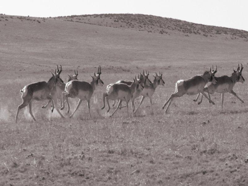 Willow Gulch Ranch : Matheson : Elbert County : Colorado