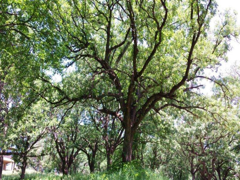 Elkhorn Trees Views & Water : Elkhorn : Douglas County : Nebraska
