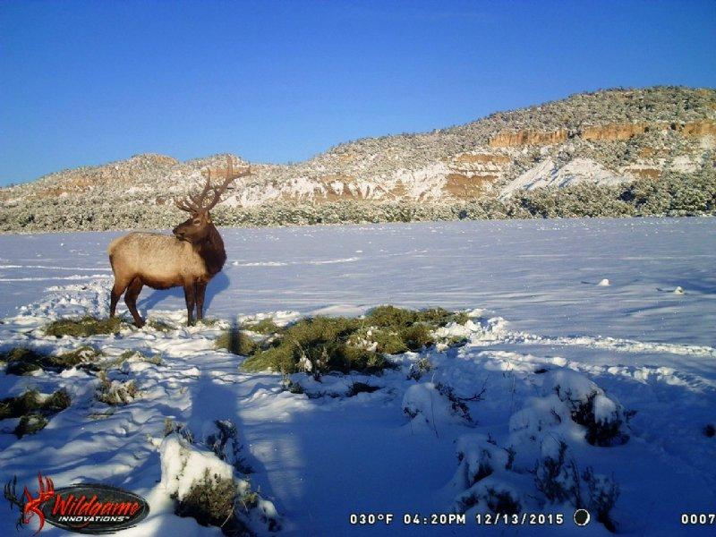 Mossback Ranch : Regina : Rio Arriba County : New Mexico