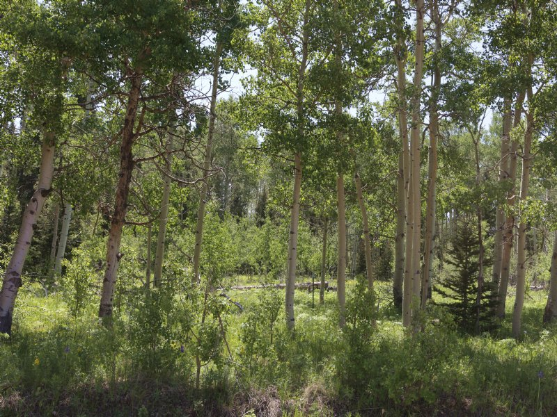 Ophir Hunting : Wetmore : Custer County : Colorado